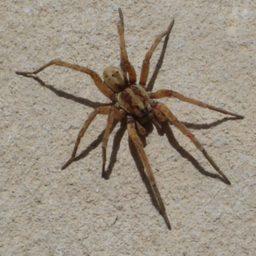 Уничтожение пауков в Ейске